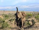 Kenia - Foto Safari